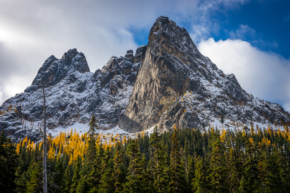 Larches Below Liberty Bell