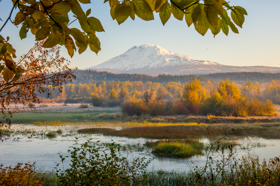 Fall Foliage and Mount Adams