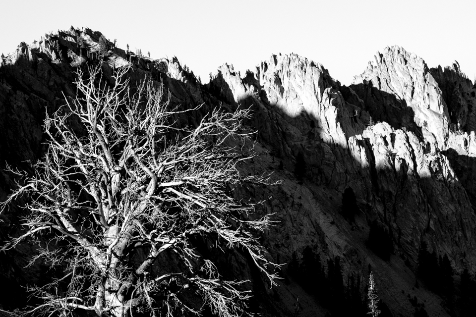Tree In Shadow, Sawtooth Mountains, Idaho