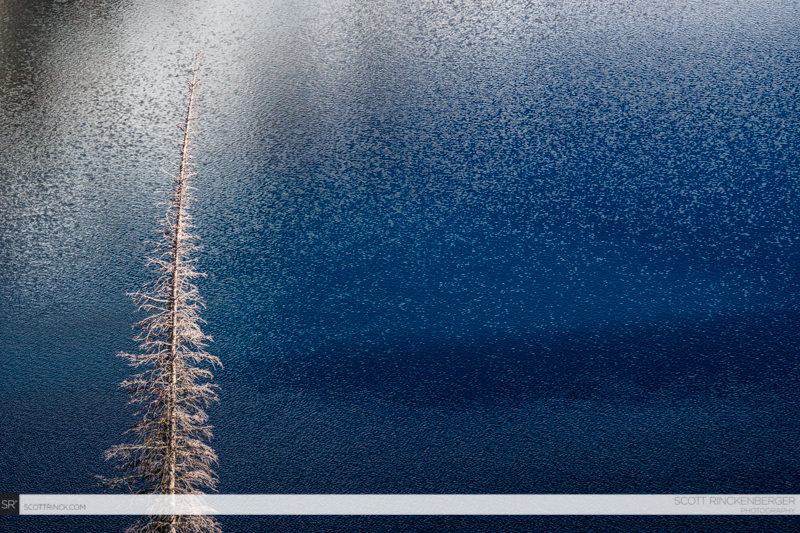 Tree and alpine lake, Sawtooth Wilderness, Idaho