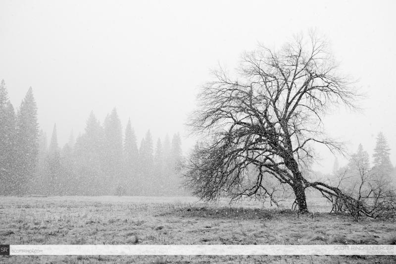 Autumn Snow in the Valley, Yosemite NP, California