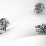 Three trees in rolling hills of snow